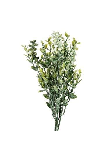 Vitale Geniş Yapraklı Kır Çiçeği Beyaz